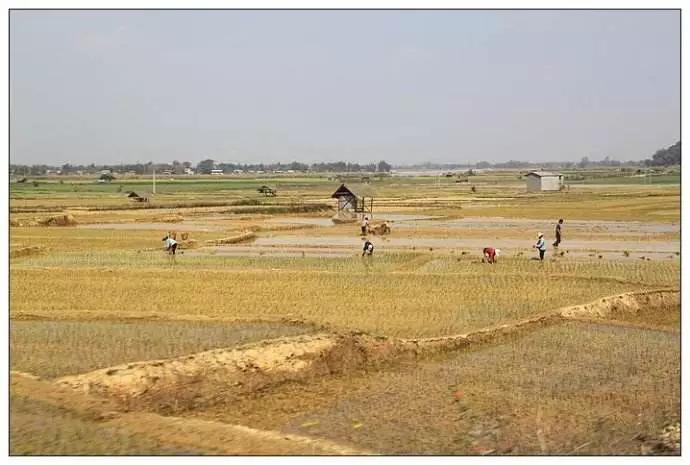【技术转移成功案例三】贝博bet体育下载农药帮助缅甸橡胶收割时间缩短3年